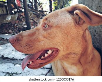 perro - perfil - dog