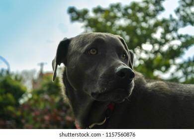 Perros de la casa
