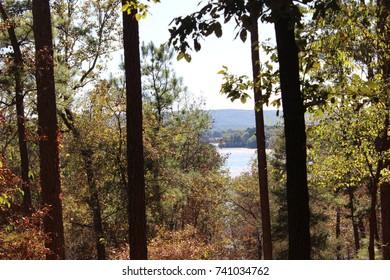 Perry Wildflower Overlook At Garvan Woodland Gardens