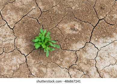Perseverance and resilience green weeds grew in a waterless desert.