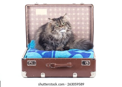 Persian cat siting in vintage suitcase over white