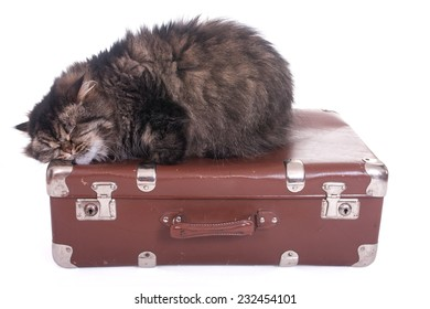 Persian cat sleeping on vintage suitcase over white background