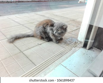 Persian cats street stray