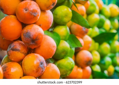 Persimmon and green tangerine, background