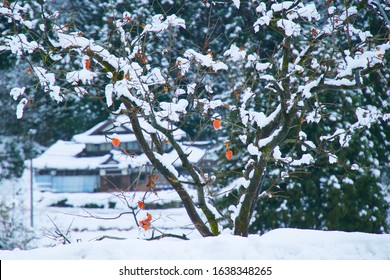 Persimmon and snow seen in the countryside