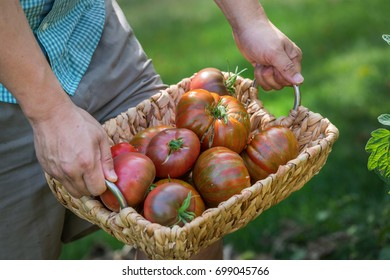 a person carrying a basket full of heirloom tomatoes