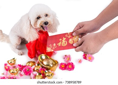Person giving red envelop with Good Luck word to dog in Chinese New Year settings