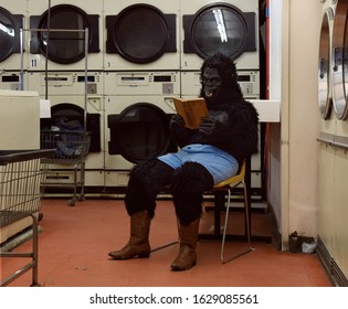 A person in a gorilla costume is sitting in a chair alone at a laundrymat reading a book for a humorous lesiure concept.