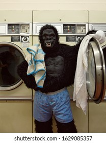 A person in a gorilla costume is standing at a laundromat wearing boxers washing towels for a funny responsibility concept.