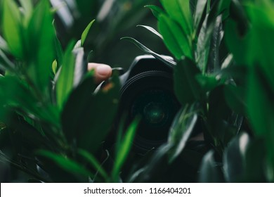Person hidden in garden leaves holding camera and taking paparazzi shots, spynig on people
