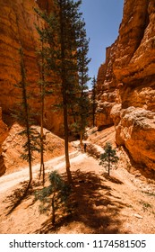 Person hiking through a valley in the Bryce Canyon National Park surrounded by rocks / hoodoos and an occasional pine tree, Bryce Canyon National Park, Utah, USA