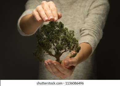 Person holds protecting hand over tree