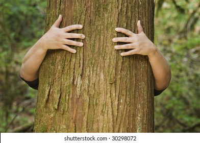 A person hugs the trunk of a large cedar tree