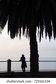 person leaning on a railing overlooking the sea with a palm tree in the evening in silhouette in summer