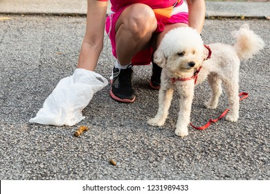 Person picking up pet dog poop droppings from street with plastic bag.