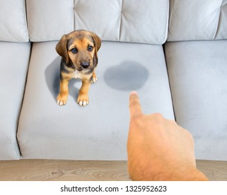 Person scolding the dog for urinating on the couch at home