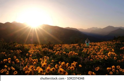 Person surrounded by flowers. Woman meditating on arnica meadow at sunset. Outdoor yoga in Washington State.  Cascade Mountains. Seattle. United States of America.