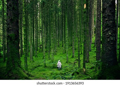 Person Walking Between Green Forest Trees - Photo by Luis del Río from Pexels