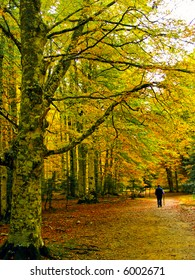 A person walking in a forest in autumn