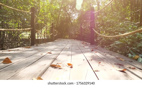 person walks along bridge among tropical plants in jungle under bright sun breaking through tree branches first point view
