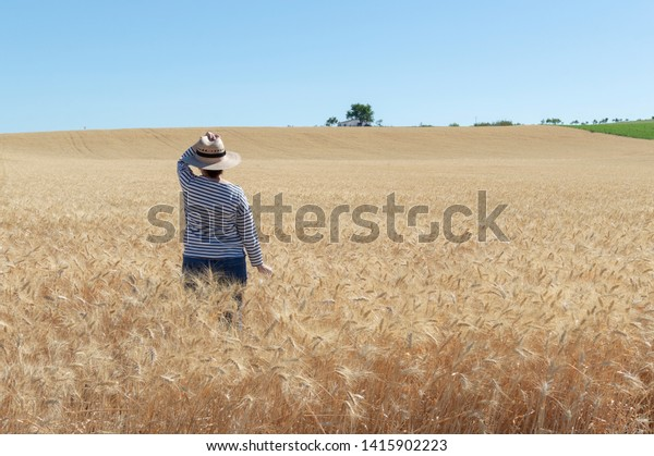 A person walks through a field of golden wheat