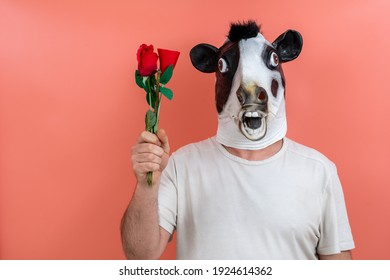 person wearing a cow mask offering a bouquet of flowers, tulips and roses with pink background