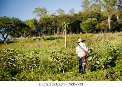 Person working on a fig plantation in the countryside of Brazil