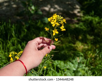 A person with a yellow flower in his hand in spring