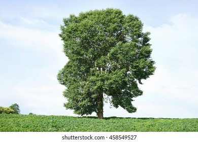 Personal growth and personality development as a medical symbol of psychology as a tree in the shape of a human head and brain social thinking for mental behavior health.