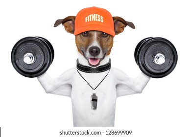 personal  trainer dog with dumbbells and a whistle