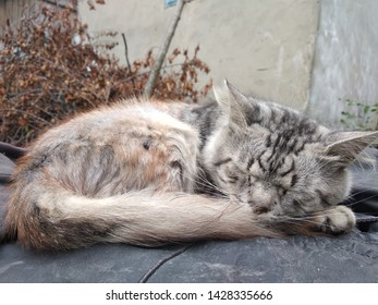 Personification of peace, sleeping gray cat, silence