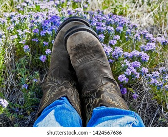 A person's legs wearing western cowboy boots laying in a field of purple flowers