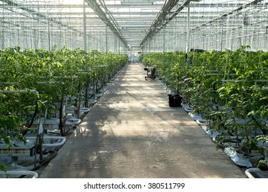 Perspective background of big industrial greenhouse