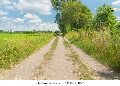 Perspective of a country road in the countryside outside Milan, Italy. Green plants on the right, green meadows on the left. The skyscrapers of the citylife district are visible in the distance.