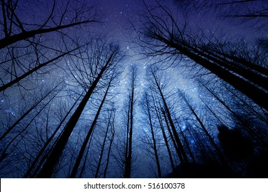 perspective of the dark outline of the dry forest and pine in the night with starry sky on background
