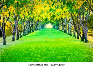 perspective landscape of beautiful blooming yellow flower on summer season