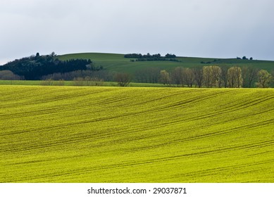Perspective of a landscape with golden canola.