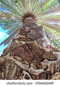 Perspektive einer Palme