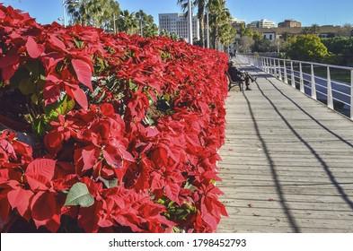 Rosas rojas en perspectiva en un día soleado en Valencia