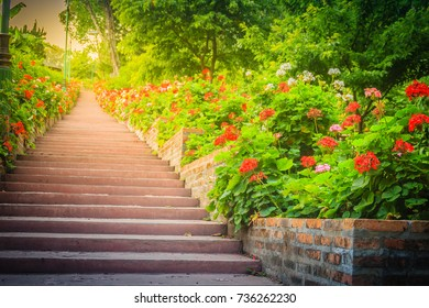 Perspective row of pink and red blooming geranium flowers on side of the brick and stone staircase at Bhubing palace, Chiang Mai, Thailand. Selective focus
