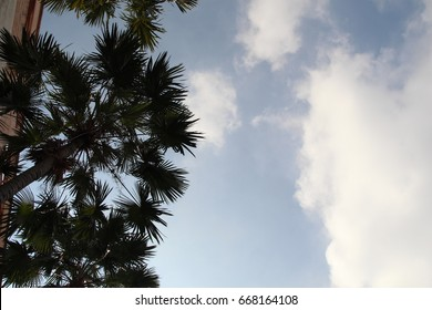Perspective view from below of a palm tree in the city over a bright cloudy day