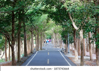 A perspective view of a bikeway under an archway of giant old trees with local people walking on the winding pathway through the lavish greenery in the morning, in Shengang District, Taichung, Taiwan