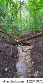 Perspective view of criss cross fallen trees over washed out ravine in a forest. Flowing water, exposed soil, trees & foliage background. Captured on a rainy summer afternoon in the upper Midwest.