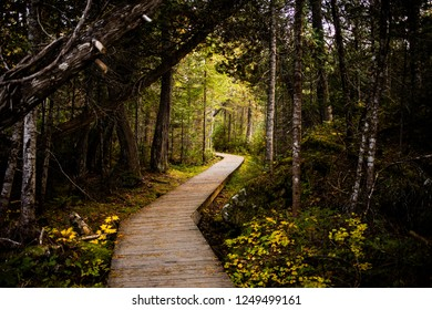 Perspective view of paved wooden pathway in picturesque empty forest of National park of Gaspe, Canada
