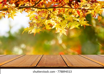 Perspective wood counter with Japanese maple tree garden in autumn.