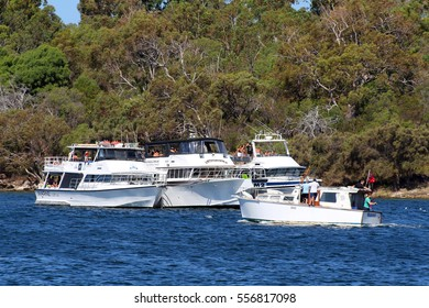 PERTH, AUSTRALIA - 26 DECEMBER 2016: Three party boats anchored together on the Swan River. The Swan is a popular recreational resource for Perth's residents & home to 15 yacht clubs. Editorial.