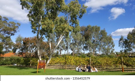 Perth, Australia - Mar 2019: People sitting on the green field at Coward & Black vineyards, swan valley under the morning sunlight with blue sky. A world class family run vineyard in Margaret River,