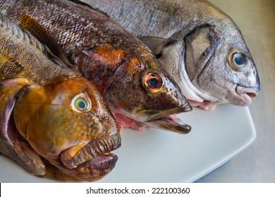Peru fish variety, Rock fish (Tramboyo) , Peruvian rock seabass (Cabrilla), and Chita