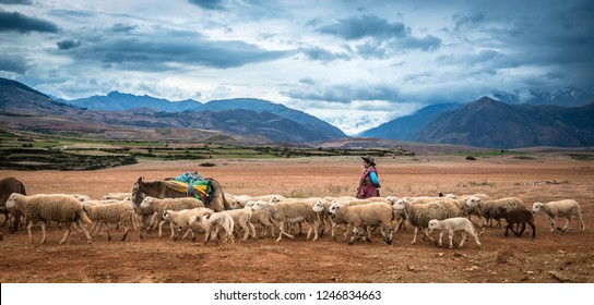 Peru, South America - 12 October 2018 : Shepherd leading herd of sheep on the mountanious background