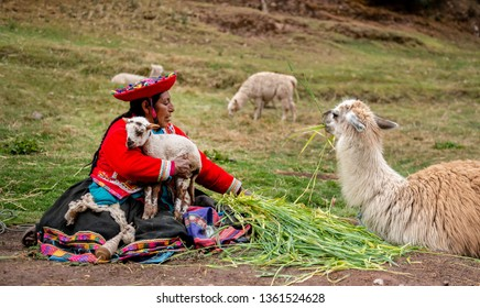Peru village - 12 October 2018 : Smiling woman in national clothes sit holding little lamas